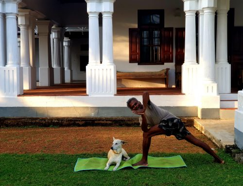 Beginners Yoga at Home.